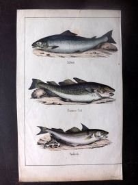 Adam White C1860 Hand Col Fish Print. Salmon, Common Cod, Haddock